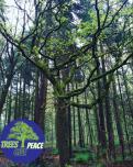 Logo & Huisstijl # 1032289 voor Treesgivepeace wedstrijd