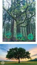 Logo & Huisstijl # 1031214 voor Treesgivepeace wedstrijd