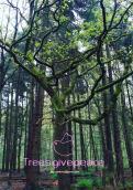 Logo & Huisstijl # 1031222 voor Treesgivepeace wedstrijd