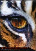Print-Anzeige  # 349446 für Greenpeace Plakat-Wettbewerb 2014: Sujet für Plakat Kampagne zum Schutz des Sumatra Tigers Wettbewerb